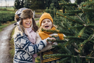 Brother and sister choosing fir tree on a Christmas tree farm - MJF02207