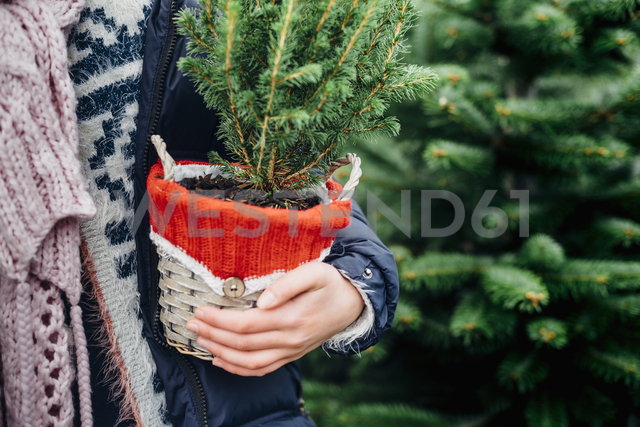 Girl holding potted Christmas tree, close up - MJF02249