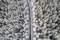 Scotland, snow on pine trees, empty road - MJOF01459