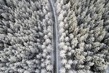 Scotland, snow on pine trees, empty road - MJOF01459