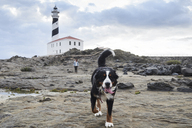 Spain, Menorca, Bernese mountain dog walking ahead of his owner outdoors at lighthouse - IGGF00287