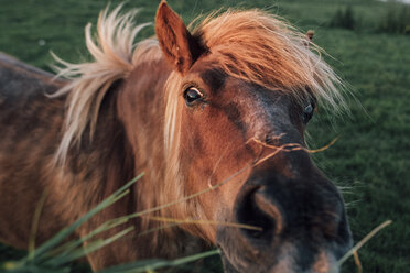 France, Seine-Maritime, portrait of brown horse - GUSF00299