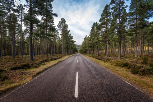 Great Britain, Scotland, Braemar,  road through pine forest - SMAF00906