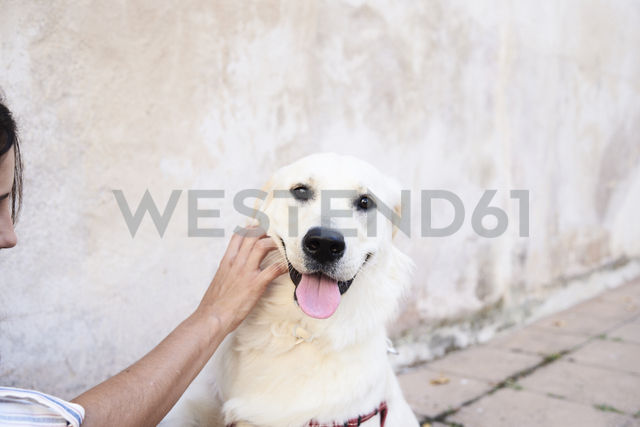 Portrait of dog stroked by owner - IGGF00313