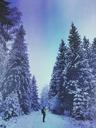 Germany, North Rhine-Westafalia, Eifel, winter in Naturpark High Venn - Eifel, man on hiking trail looking at snow-covered fir trees - GWF05370