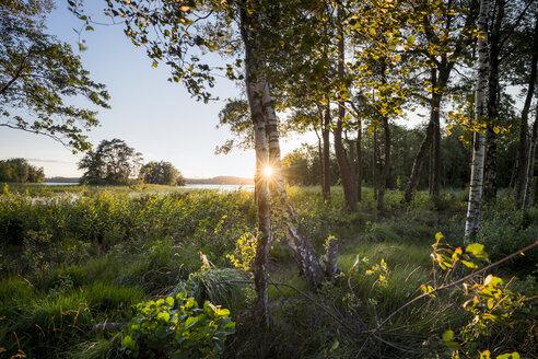 Sweden, Lake Bolmen, sunset - STCF00351