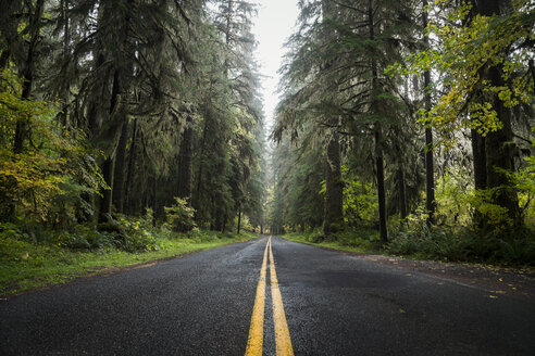 USA, Washington State, Hoh Rain Forest, Road - STCF00369