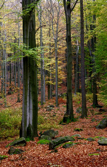 Germany, forest in autumn - JTF00878