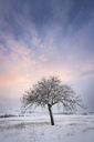 Spain, sunset in winter landscape with single bare tree - DHCF00167