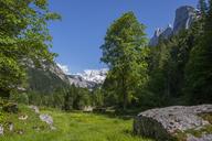 Austria, Upper Austria, Salzkammergut, Gosau, Holzmeisteralm, Dachstein massif - WWF04037
