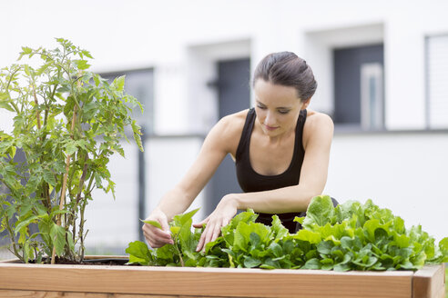 Young woman harvesting, bed with salad and herbs in garden - MMAF00226