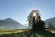 Germany, Bavaria, Upper Bavaria, Chiemgau Alps, Reit im Winkl, Gletschermuehlenfeld, field and trees against the sun - LBF01717