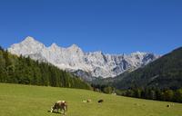 Austria, Salzburg State, Filzmoos, Hachau, alpine meadow, View to Dachstein, Dachstein massif - WWF04084