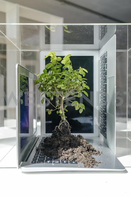 Little tree growing on laptop - FLAF00032