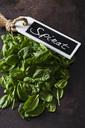 Spinach - CSF28664