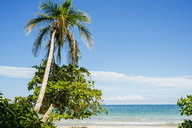 Costa Rica, Limon, Beach with palm tree in the national park of Cahuita - KIJF01859