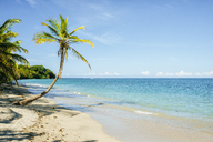 Costa Rica, Limon, Beach with palm tree in the national park of Cahuita - KIJF01862