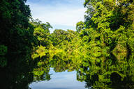 Costa Rica, Tortuguero, Landscape with reflection in the mangroves of Tortuguero - KIJF01880