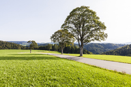 Germany, Baden-Wurttemberg, Black Forest, Tree at country road near St. Maergen - WDF04253