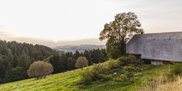Germany, Baden-Wurttemberg, Black Forest, Black Forest farmhouse near Thurner at sunset - WDF04274