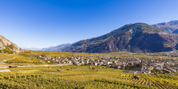 Switzerland, Valais, Leytron, townscape and vineyards - WDF04305
