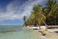 Carribean, Dominican Republic, beach on the Caribbean Island Isla Saona - GFF01056