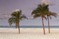 Carribean, Dominican Republic, Punta Cana, Playa Bavaro, moving palms on the beach at sunset - GFF01059