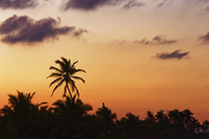 Carribean, Dominican Republic, Punta Cana, Playa Bavaro, silhouettes of palms at sunset - GFF01062