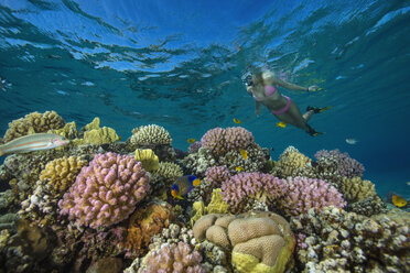 Egypt, Red Sea, Hurghada, young woman snorkeling at coral reef - YRF00173