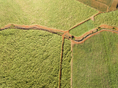Mauritius, Highlands, sugarcane fields - FOF09694