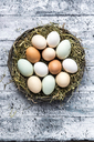 Different eggs, white, brown, light brown and green eggs - SARF03482