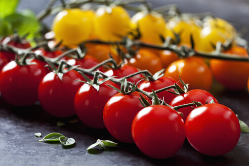 Cherry tomatoes, close-up - CSF28765