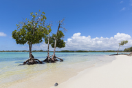 Mauritius, East Coast, Indian Ocean, mangrove tree - FOF09789