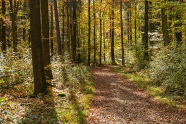 Germany, Bavaria, Lower Bavaria, near Kelheim, Weltenburger Enge, forest path in autumn - SIEF07678