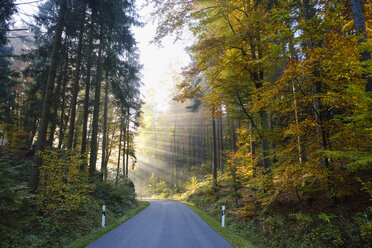 Germany, Bavaria, Lower Bavaria, Altmuehl Valley, empty road near Riedenburg in autumn, morning fog - SIEF07687