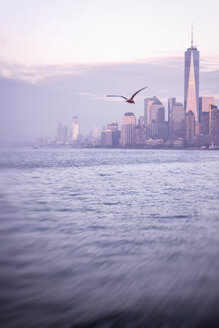 USA, New York City, Manhattan, One World Trade Center, flying seagull - CMF00786