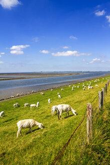 Germany, Schleswig-Holstein, Husum, herd of sheep on dike - PUF01172