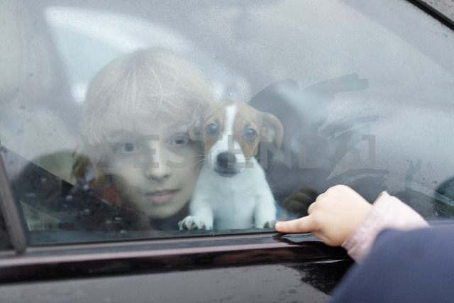 Portrait of boy and Jack Russel Terrier puppy looking out of car window - KMKF00141
