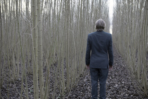 Businessman standing amidst willows - PSTF00064