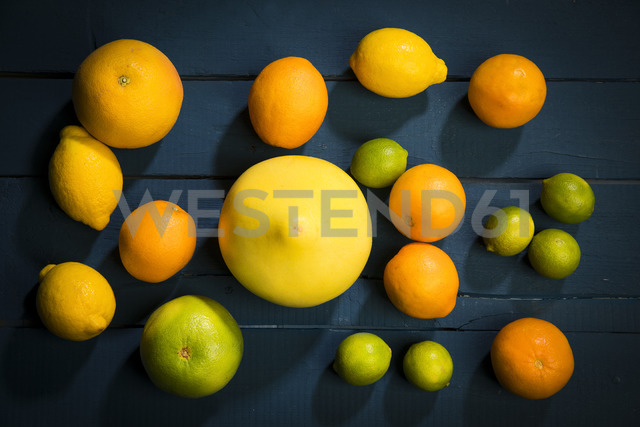 Citrus fruits on dark background - MAEF12512
