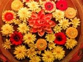 Lotus, flowers, yellow, orange, red - NGF00438