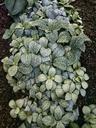 green plant, garden - NGF00444