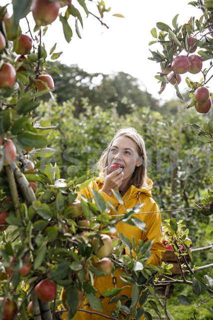 Young woman eating apple from tree in orchard - PESF00890