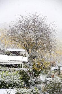 Germany, Wuerzburg, allotment garden and snowfall - NDF00735