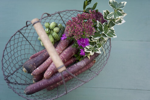Basket with purple haze, mini cucumber, cauliflower mushroom, aster and box tree - GISF00305