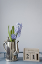 Flower decoration in january, hyacinth in metal jug - GISF00308