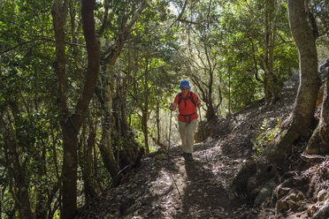 Spain, Canary Islands, La Gomera, Parque Natural de Majona, female hiker in Laurel forest - SIEF07707