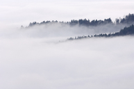 Germany, Baden-Wurttemberg, Forest trees standing out of fog in the valley, Black Forest - RUEF01792