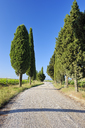 Italy, Siena, Val d'Orcia, Dirt road lined with cypress trees, Cupressus sempervirens - RUEF01795