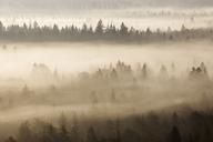 German, Bavaria, Munich, Isar Valley, Morning mist in forest - RUEF01798